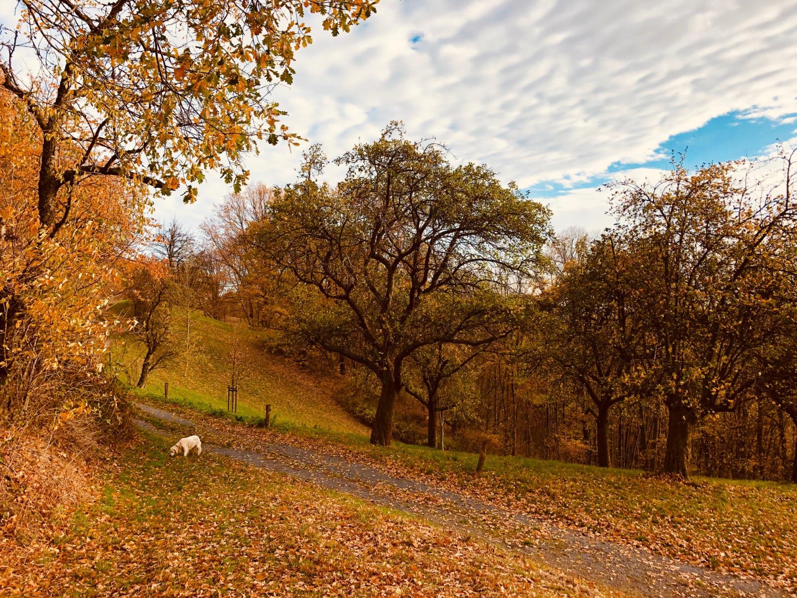 Sobrigau im Herbst
